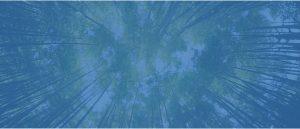 bosque difuminado en azul