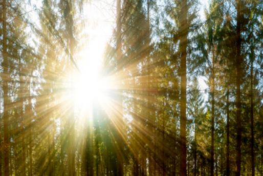 rayos de luz a traves de bosque