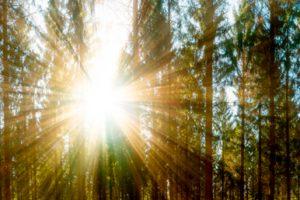 rayos de sol en un bosque